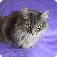 Adopt A Pet :: Miss McKitty - Rigaud, QC