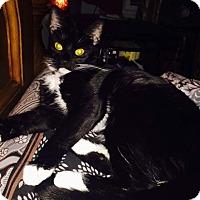 Adopt A Pet :: Mia Starr - Brooklyn, NY