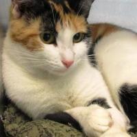 Adopt A Pet :: Fluent - Memphis, TN