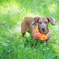 Adopt A Pet :: Sassy - Toronto, ON