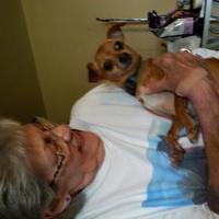 Adopt A Pet :: Sugar - Fairfield, OH