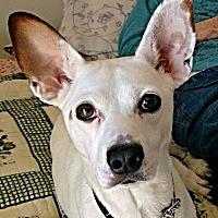 Adopt A Pet :: Dozer - Fredericksburg, VA