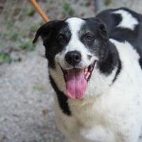 Adopt A Pet :: Hailey - Decatur, GA