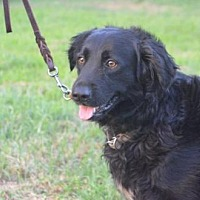 Adopt A Pet :: BENJAMIN - HARVEY FLOOD VICTIM! - Boulder, CO