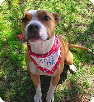 American Pit Bull Terrier Mix Dog for adoption in El Cajon, California - Honey