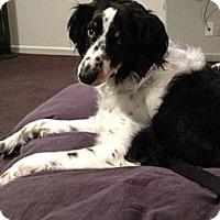 Adopt A Pet :: Maddie - Washington, IL