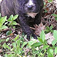 Adopt A Pet :: Female #2 - Roaring Spring, PA