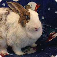 Adopt A Pet :: Michele - Williston, FL