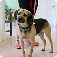 Adopt A Pet :: Dewey - Richmond, VA