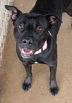 Labrador Retriever Dog for adoption in Fort Madison, Iowa - Rosalyn