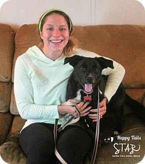 Border Collie/Beagle Mix Dog for adoption in Northville, Michigan - zDuncan - ADOPTED
