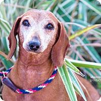 Adopt A Pet :: James - Gainesville, FL