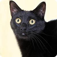 Adopt A Pet :: Ella - Encinitas, CA
