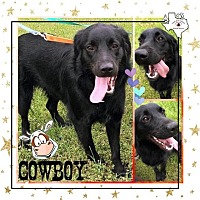 Adopt A Pet :: Cowboy - Quinlan, TX