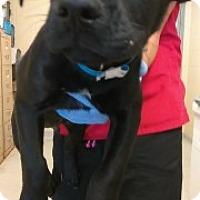 Adopt A Pet :: Kaysen 7366 - Joplin, MO