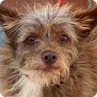 Adopt A Pet :: VENUS (video) - Los Angeles, CA