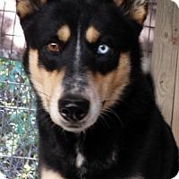 Adopt A Pet :: Shadow - Morgantown, WV