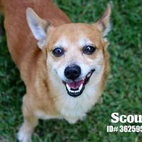 Adopt A Pet :: Scout - Lonely Heart - Gulfport, MS