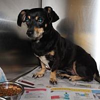 Adopt A Pet :: Kip - Seminole, FL
