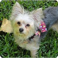 Adopt A Pet :: Pixie - West Palm Beach, FL