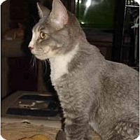Adopt A Pet :: Weeble - Chesapeake, VA