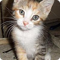 Adopt A Pet :: Minnie - Chandler, AZ