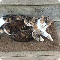 Adopt A Pet :: Momma & Babies - Halifax, NS