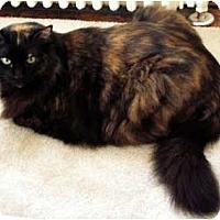 Adopt A Pet :: Lolita - Alexandria, VA