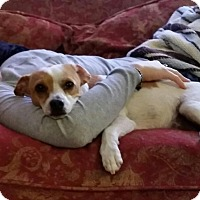 Adopt A Pet :: Jake - Los Angeles, CA