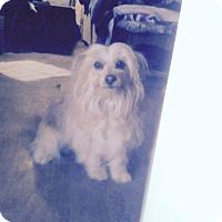 Adopt A Pet :: Kreeg - Lucerne Valley, CA