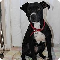 Adopt A Pet :: Aries - Howell, MI