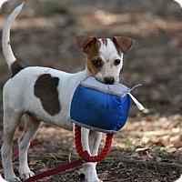 Adopt A Pet :: Raine - South Dennis, MA