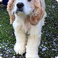 Adopt A Pet :: Rosy-ADOPTED - Sacramento, CA