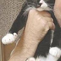 Adopt A Pet :: Typo - Miami, FL