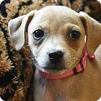 Adopt A Pet :: Willow - North Brunswick, NJ
