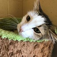 Adopt A Pet :: Zoey - Chula Vista, CA