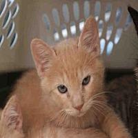 Adopt A Pet :: LOGAN - Redlands, CA