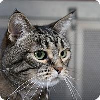 Adopt A Pet :: Jewels - Sarasota, FL