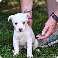 Adopt A Pet :: Ian - South Dennis, MA