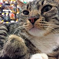 Adopt A Pet :: Mimi - Lancaster, CA