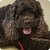 Adopt A Pet :: Lucky - Sugarland, TX