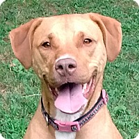 Adopt A Pet :: Khaleesi Lee - Durham, NC