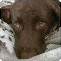 Adopt A Pet :: Kita - Altmonte Springs, FL