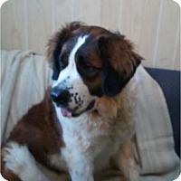 Adopt A Pet :: Heidi  ADOPTED!! - Antioch, IL