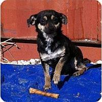 Adopt A Pet :: BeeBop - McKinney, TX