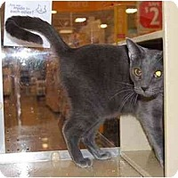 Adopt A Pet :: Cliffie - Modesto, CA