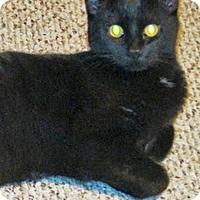 Adopt A Pet :: Monkey - N. Billerica, MA