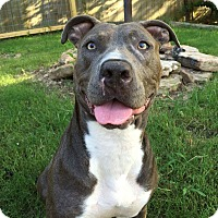 Adopt A Pet :: Aaliyah - Arlington, TN