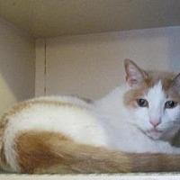 Adopt A Pet :: Scooby - Rochester, NY