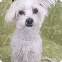 Adopt A Pet :: Disco - Los Angeles, CA
